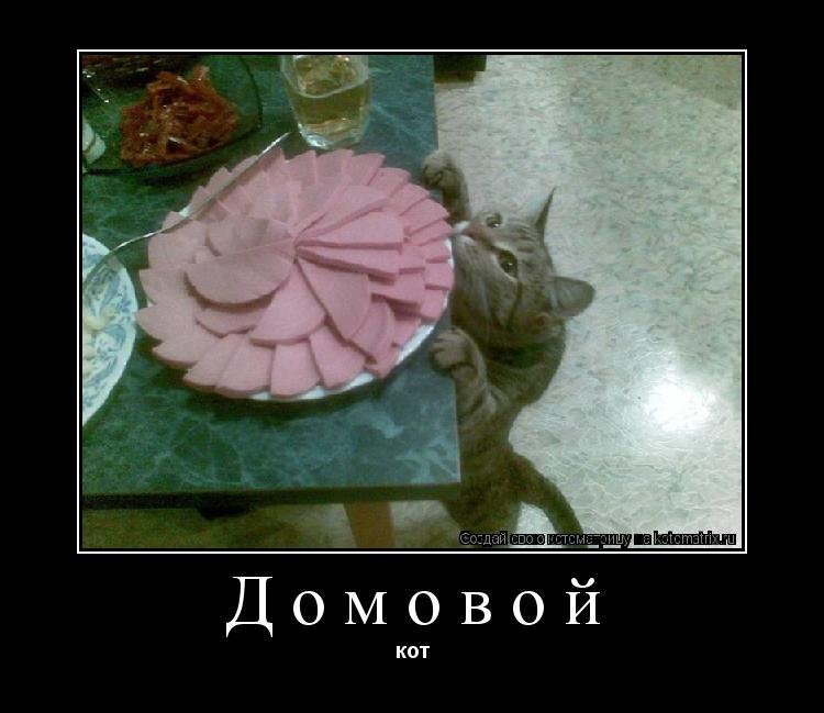 Котоматрица: Домовой кот