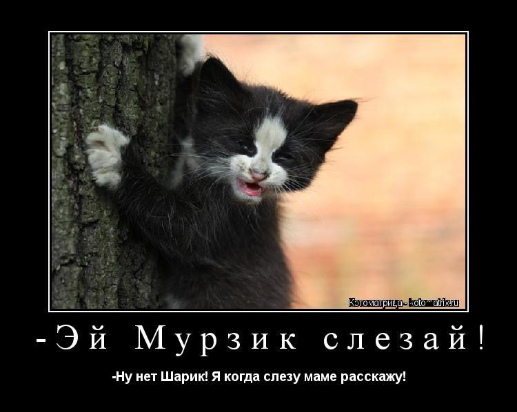 Котоматрица: -Эй Мурзик слезай! -Ну нет Шарик! Я когда слезу маме расскажу!