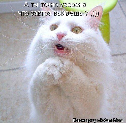 Котоматрица: А ты точно уверена  что завтра выйдешь ? ;)))