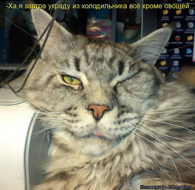 Котоматрица: -Ха,я завтра украду из холодильника всё кроме овощей...