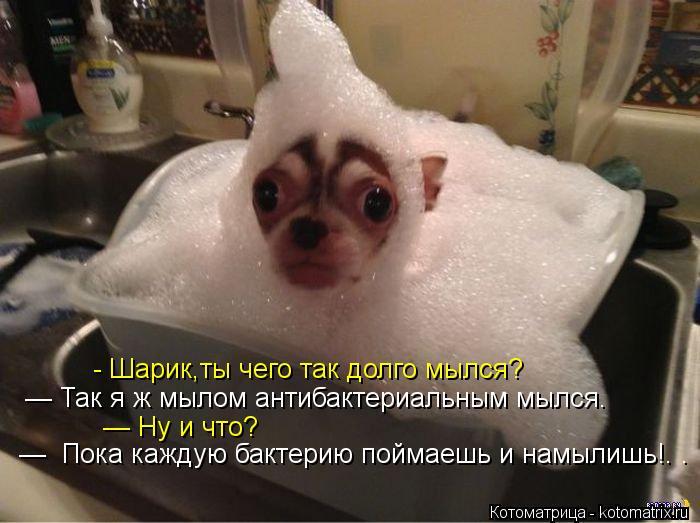 Котоматрица: - Шарик,ты чего так долго мылся? — Так я ж мылом антибактериальным мылся.  — Ну и что? —  Пока каждую бактерию поймаешь и намылишь!. .