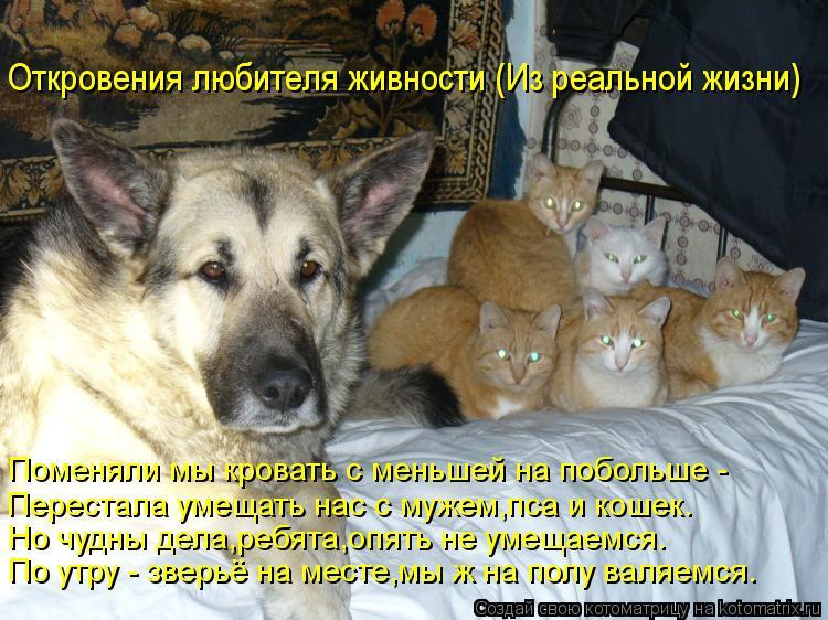 Котоматрица: Откровения любителя живности (Из реальной жизни) Поменяли мы кровать с меньшей на побольше - Перестала умещать нас с мужем,пса и кошек. Но чу