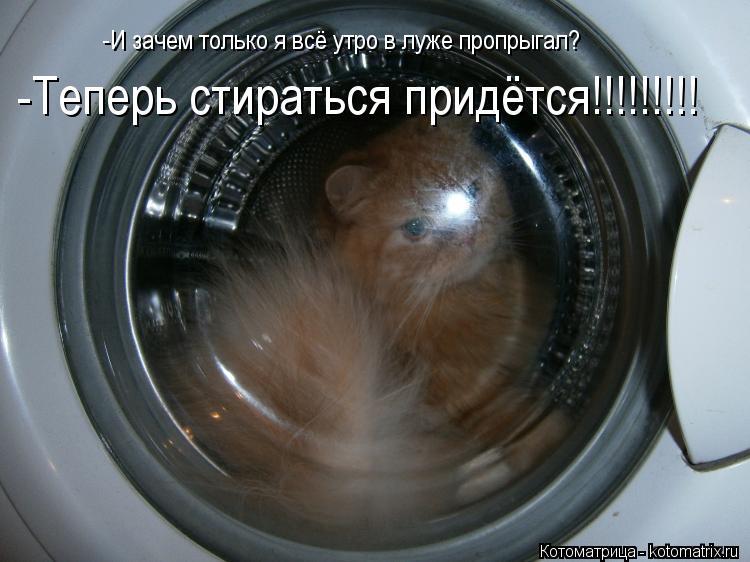 Котоматрица: -И зачем только я всё утро в луже пропрыгал? -Теперь стираться придётся!!!!!!!!!