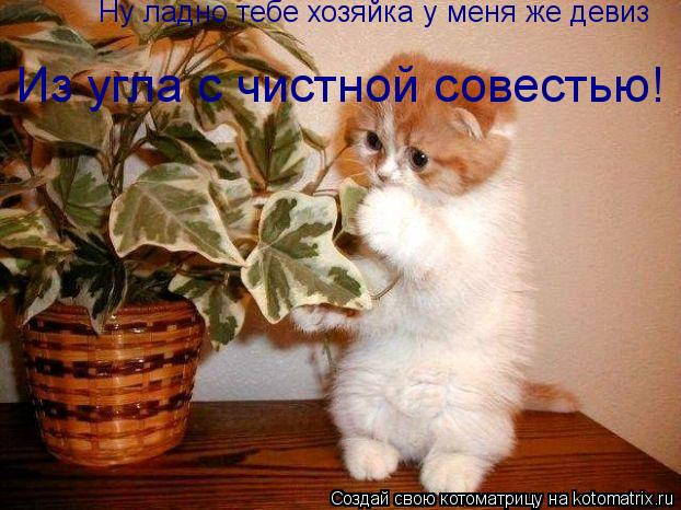 Котоматрица: Ну ладно тебе хозяйка у меня же девиз Из угла с чистной совестью!