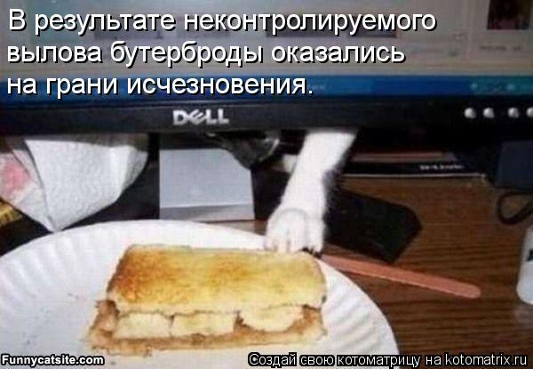 Котоматрица: В результате неконтролируемого  вылова бутерброды оказались  на грани исчезновения.