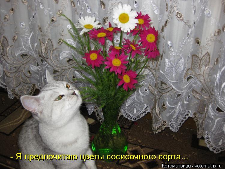 Котоматрица: - Я предпочитаю цветы сосисочного сорта...