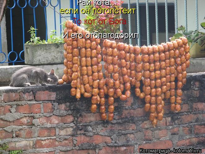 Котоматрица: Рай кота... если он потолстеит То кот от Бога И его отблагодорил