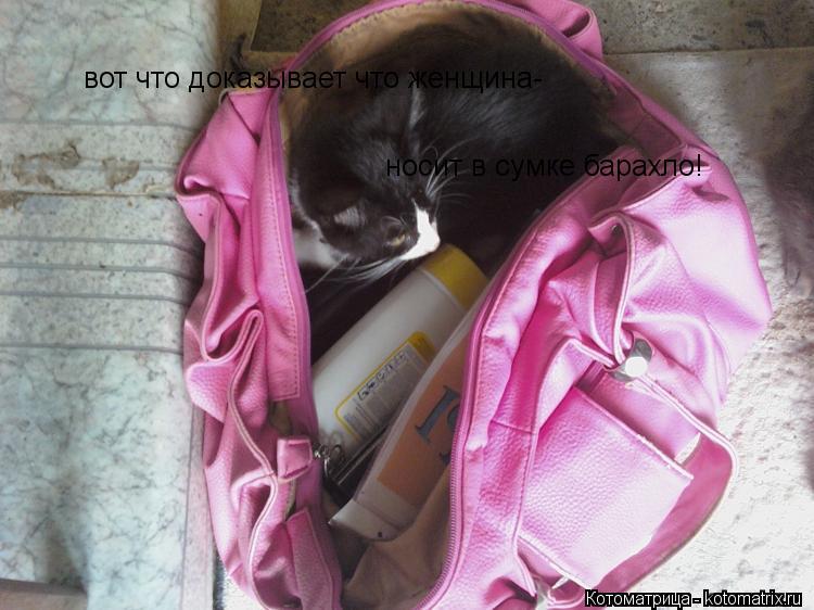 Котоматрица: вот что доказывает что женщина- носит в сумке барахло!