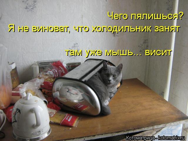Котоматрица: Чего пялишься? Я не виноват, что холодильник занят там уже мышь... висит
