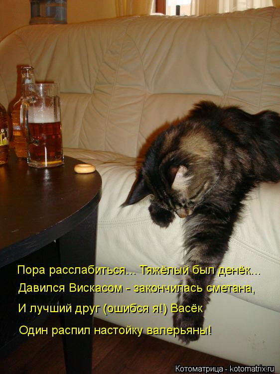 Котоматрица: Пора расслабиться... Тяжёлый был денёк... Давился Вискасом - закончилась сметана, И лучший друг (ошибся я!) Васёк Один распил настойку валерья