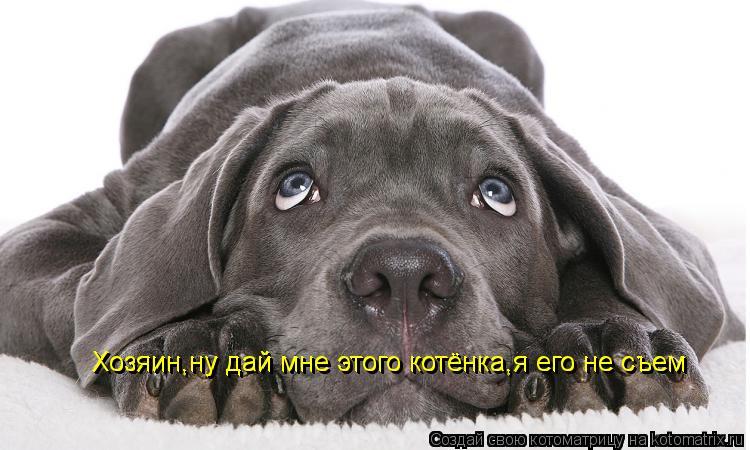 Котоматрица: Хозяин,ну дай мне этого котёнка,я его не съем Хозяин,ну дай мне этого котёнка,я его не съем