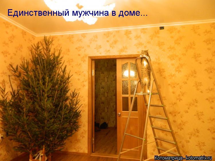 Котоматрица: Единственный мужчина в доме...