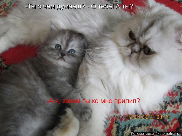 Котоматрица: -Ты о чём думаеш? - О тебе! А ты? -А я, зачем ты ко мне прилип?