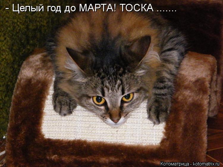 Котоматрица: - Целый год до МАРТА! ТОСКА .......