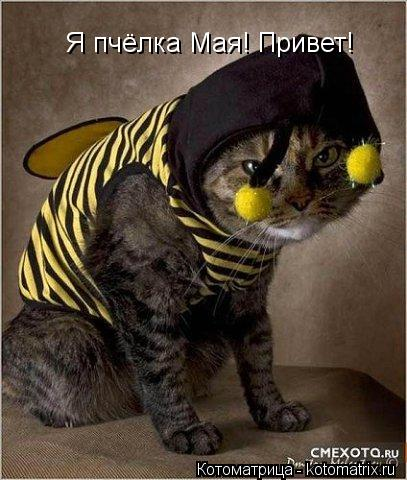 Котоматрица: Я пчёлка Мая! Привет!