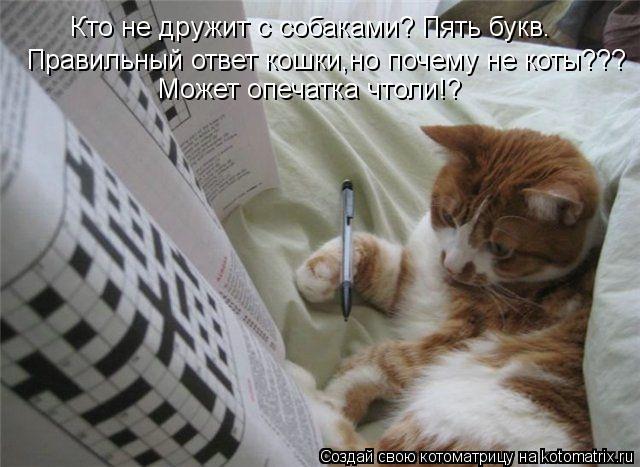 Котоматрица: Кто не дружит с собаками? Пять букв. Правильный ответ кошки,но почему не коты??? Может опечатка чтоли!?