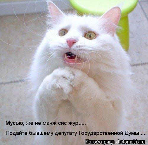 Котоматрица: Подайте бывшему депутату Государственной Думы..... Мусью, же не манж сис жур.....