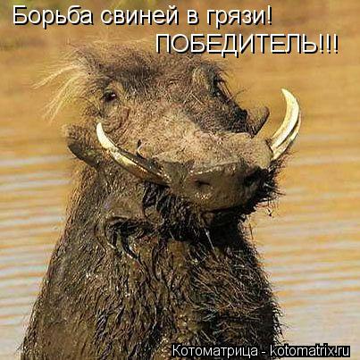 Котоматрица: Борьба свиней в грязи! ПОБЕДИТЕЛЬ!!!