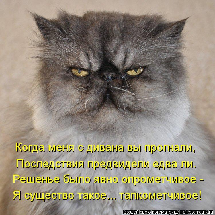 Котоматрица: Когда меня с дивана вы прогнали,  Последствия предвидели едва ли. Решенье было явно опрометчивое -  Я существо такое... тапкометчивое!