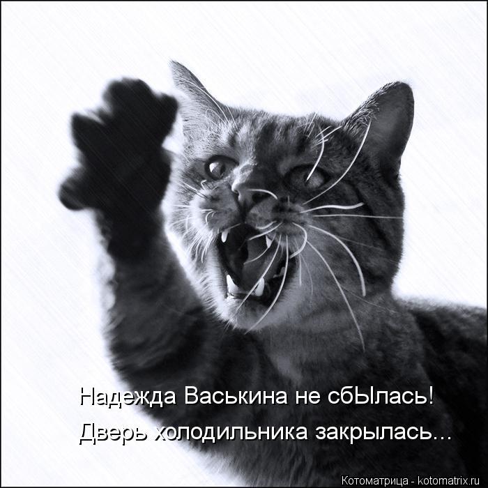 Котоматрица: Надежда Васькина не сбЫлась! Дверь холодильника закрылась...