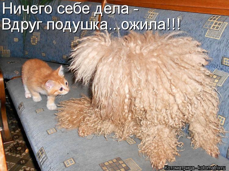 Котоматрица: Ничего себе дела - Вдруг подушка...ожила!!!
