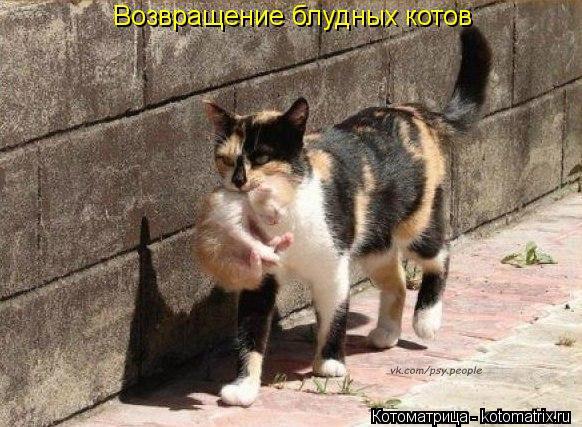 Котоматрица: Возвращение блудных котов
