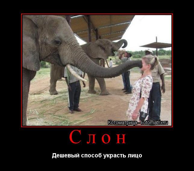 люди занимающиеся ловлей слонов используют