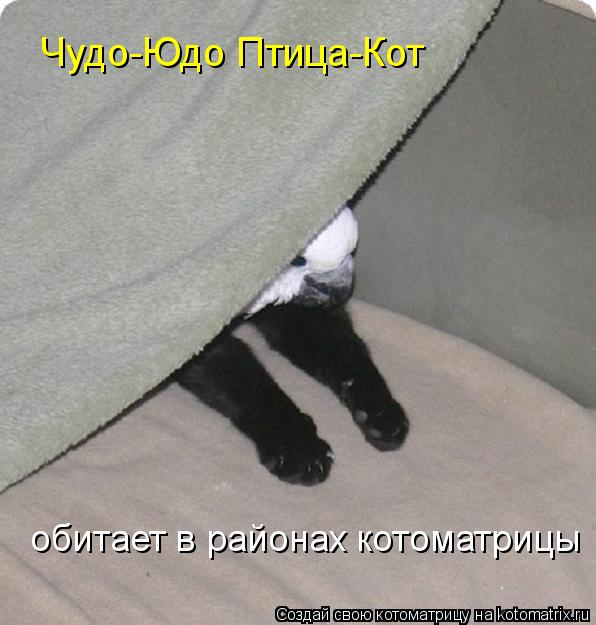 Котоматрица: Чудо-Юдо Птица-Кот обитает в районах котоматрицы