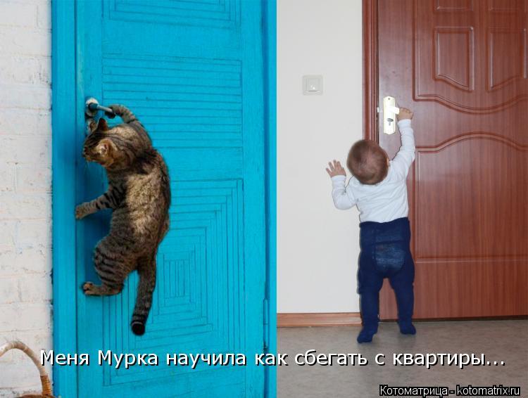 Котоматрица: Меня Мурка научила как сбегать с квартиры...