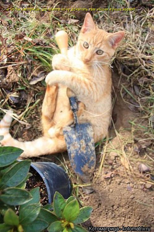 Котоматрица: и чо ты смотришь, до египта хочу докапать там кошек лучше кормят