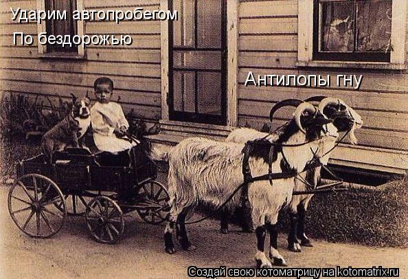 Котоматрица: Антилопы гну Ударим автопробегом  По бездорожью