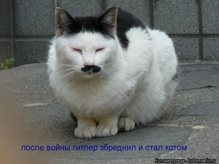 Котоматрица: после войны гитлер збреднил и стал котом