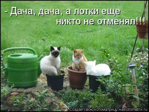 Котоматрица: - Дача, дача, а лотки еще  никто не отменял!!!