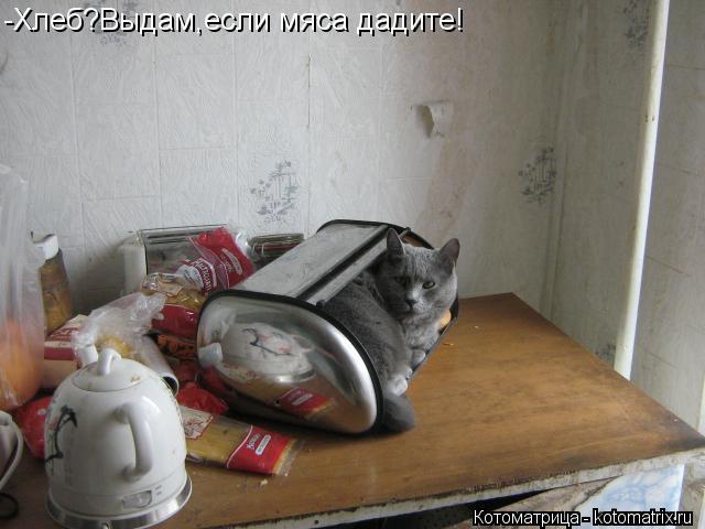 Котоматрица: -Хлеб?Выдам,если мяса дадите!