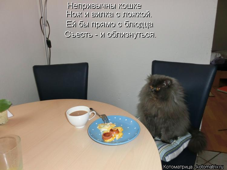 Котоматрица: Непривычны кошке Нож и вилка с ложкой. Ей бы прямо с блюдца Съесть - и облизнуться.