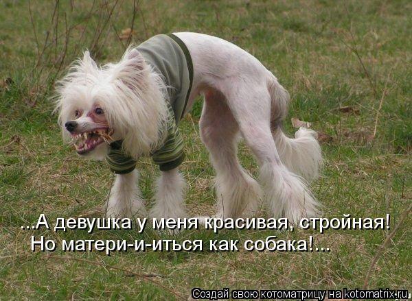 Котоматрица: ...А девушка у меня красивая, стройная! Но матери-и-иться как собака!...