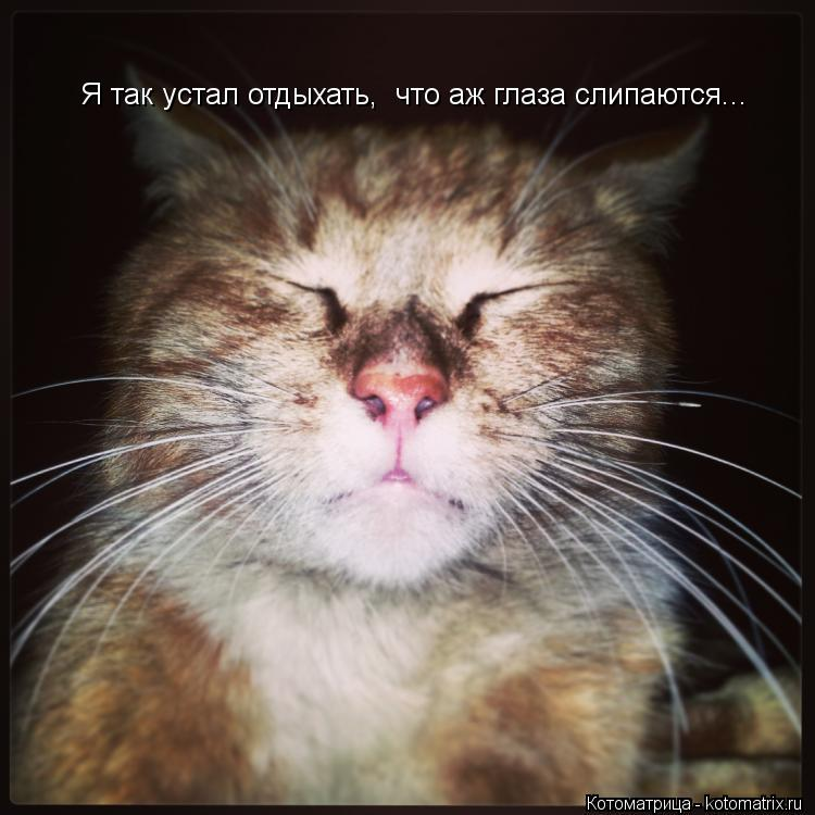Котоматрица: Я так устал отдыхать,  что аж глаза слипаются...