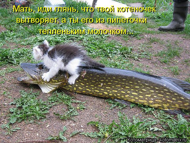 Котоматрица: Мать, иди глянь, что твой котеночек вытворяет, а ты его из пипеточки  тепленьким молочком...
