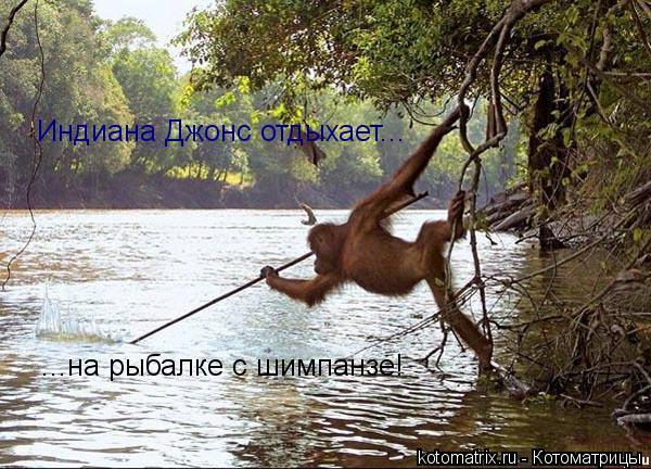 Котоматрица: ...на рыбалке с шимпанзе! Индиана Джонс отдыхает...