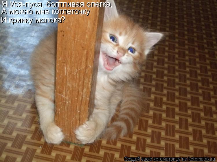 Котоматрица: Я Уся-пуся, болтливая слегка, А можно мне котлеточку И кринку молока ?