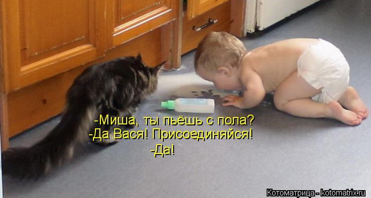 Котоматрица: -Миша, ты пьёшь с пола? -Да Вася! Присоединяйся! -Да!