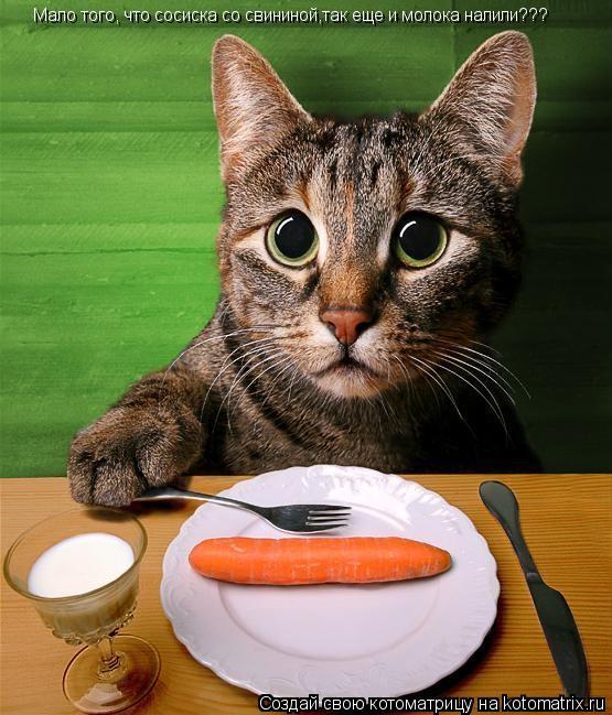 Котоматрица: Мало того, что сосиска со свининой,так еще и молока налили???