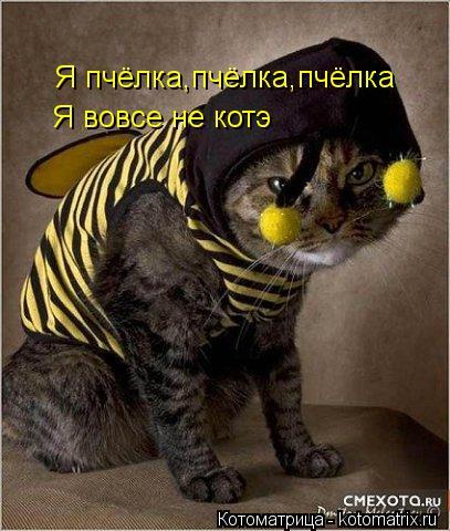 Котоматрица: Я пчёлка,пчёлка,пчёлка Я пчёлка,пчёлка,пчёлка Я вовсе не котэ