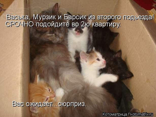 Котоматрица: Васька, Мурзик и Барсик из второго подьезда! Вас ожидает...сюрприз. СРОЧНО подойдите во 2ю квартиру.