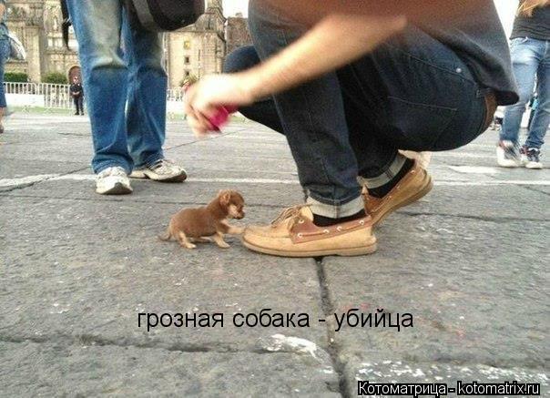 Котоматрица: грозная собака - убийца