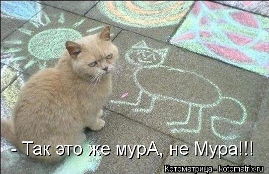 Котоматрица: - Так это же мурА, не Мура!!!