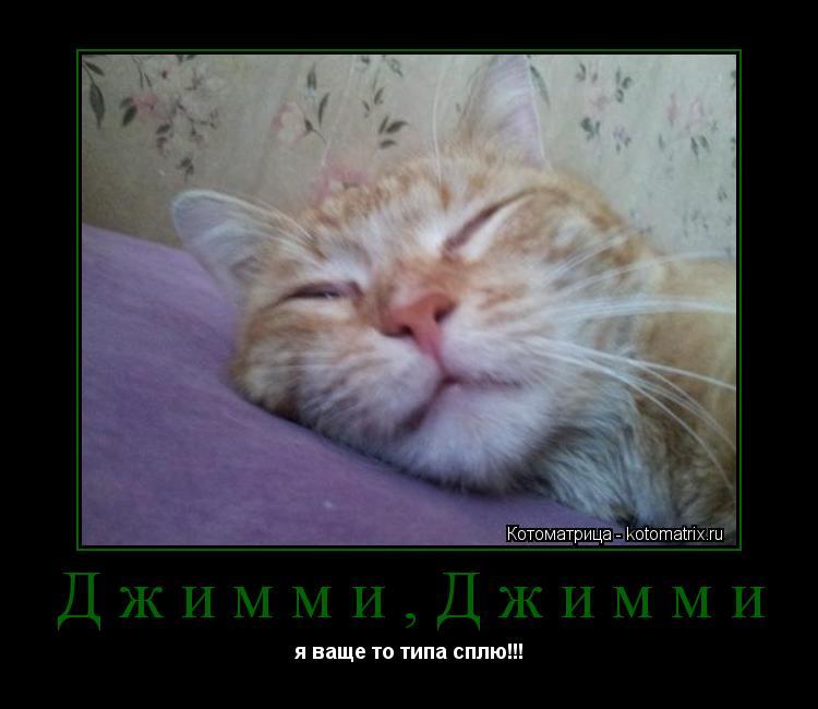 Котоматрица: Джимми,Джимми я ваще то типа сплю!!!