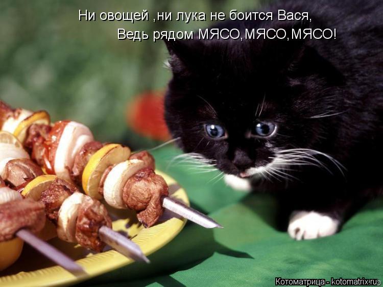Котоматрица: Ни овощей ,ни лука не боится Вася, Ведь рядом МЯСО,МЯСО,МЯСО!