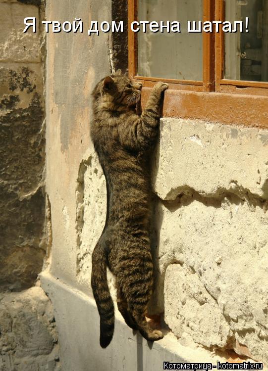 Котоматрица: Я твой дом стена шатал!