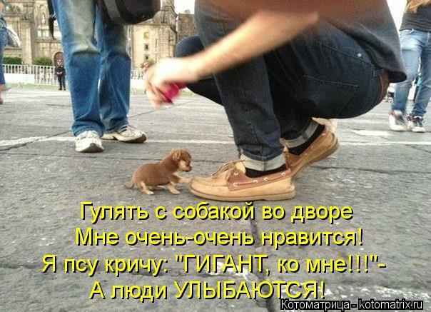 """Котоматрица: Гулять с собакой во дворе Мне очень-очень нравится! Я псу кричу: """"ГИГАНТ, ко мне!!!""""- А люди УЛЫБАЮТСЯ!"""